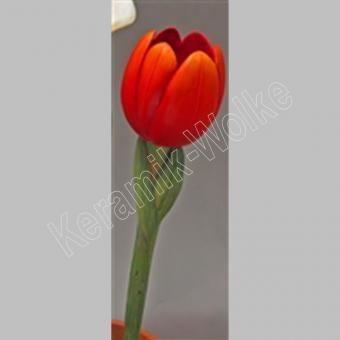Tulpe, 77 cm