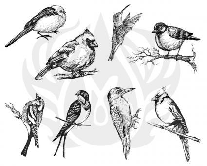 Aviary-Small Birds