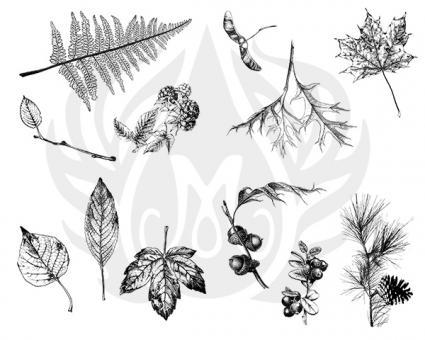 Botanical-Leaves